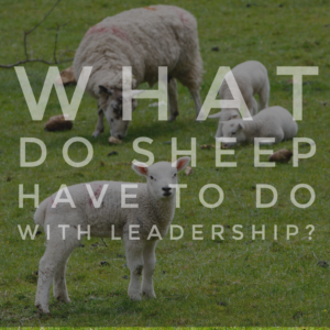 What Do Sheep Have To Do With Leadership?